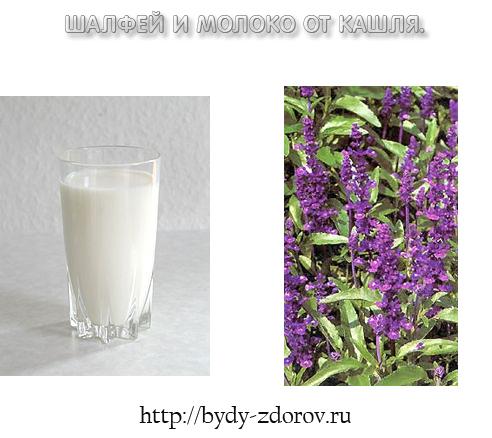 шалфей молоко от кашля